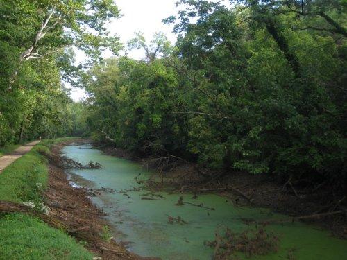 Algae in the C&O canal.